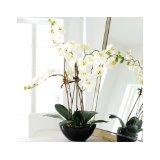 k nstliche orchideen k nstliche pflanzen und deko. Black Bedroom Furniture Sets. Home Design Ideas
