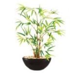 zimmerpflanzen f r wenig licht k nstliche pflanzen und deko. Black Bedroom Furniture Sets. Home Design Ideas